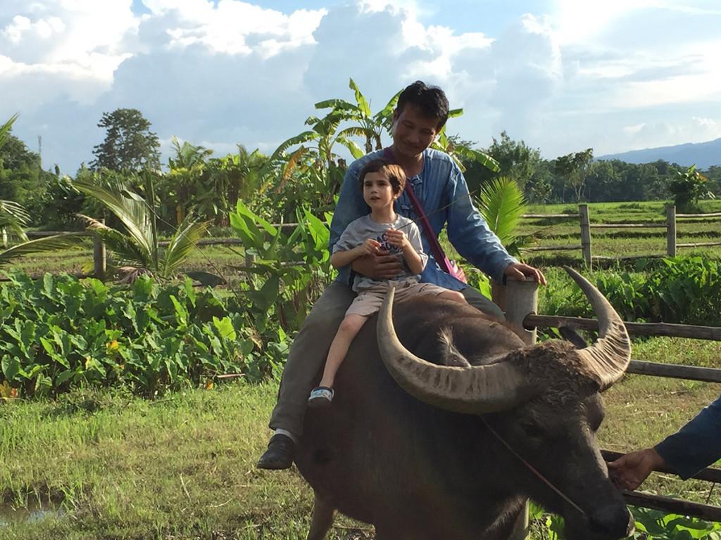Water Buffalo Chiang Rai Thailand