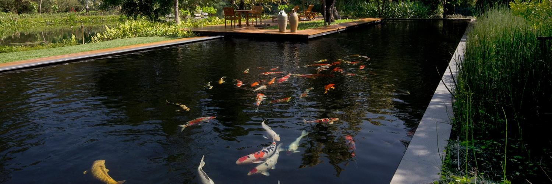 Pasaktong khum sak tong pasaktong for Koi pool villa