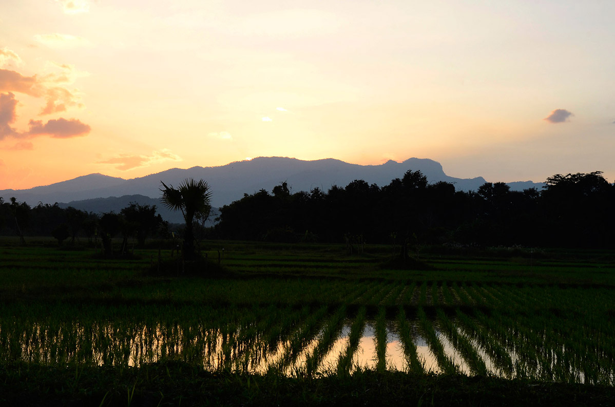 Sunrise-Ricefields