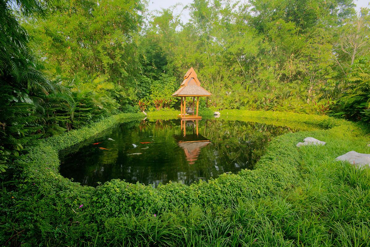 Koi Pond Chiang Rai Northern Thailand 2